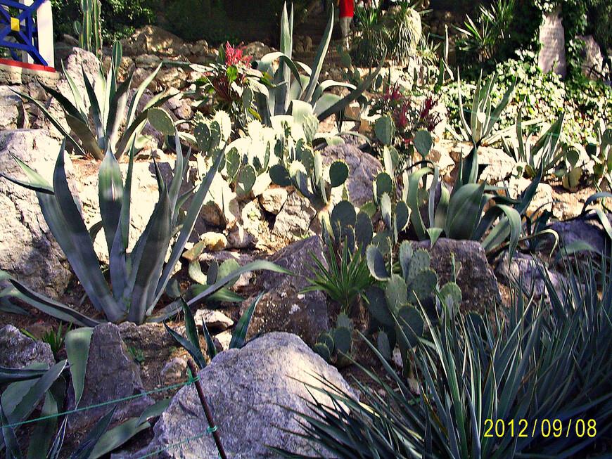 Маленькое царство кактусов.