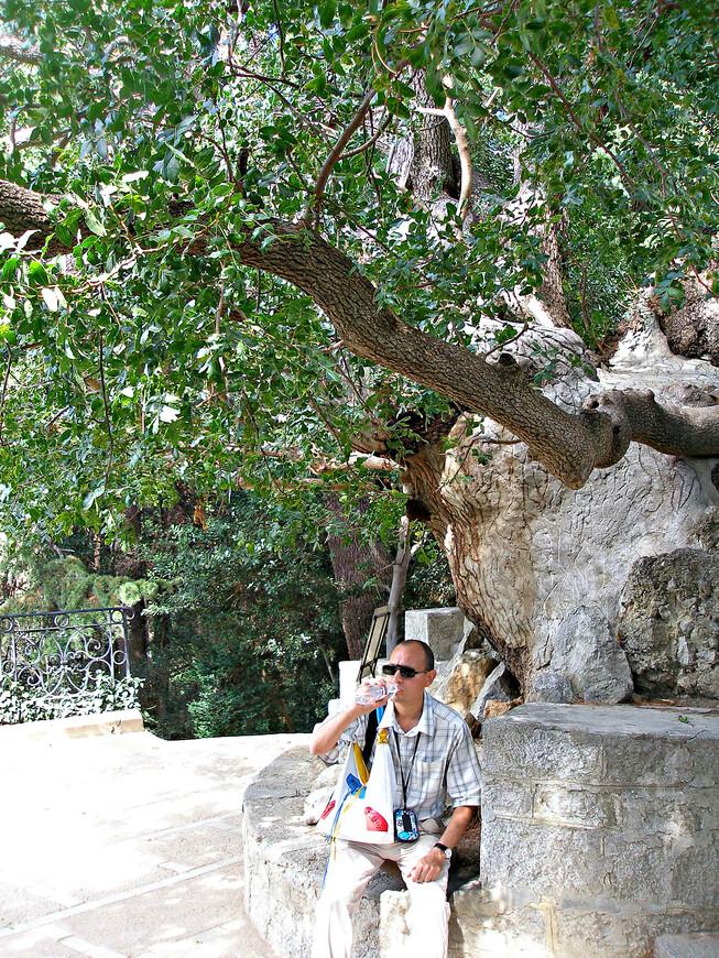 Отдых на корнях фисташкового дерева. Говорят, ему больше тысячи лет.