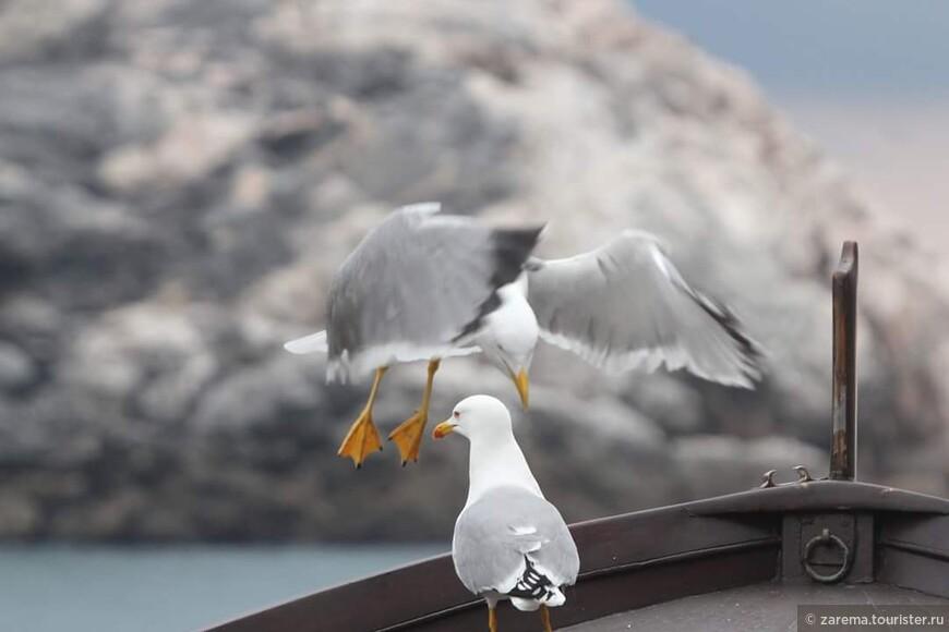 Шумные , лёгкие , свободные , любопытные , парящие над морем как дельтоплаты ... это местные чайки.
