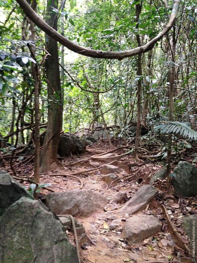 Настоящие джунгли!