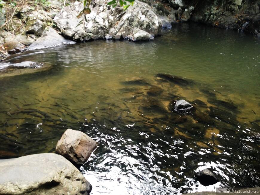 Некоторые тут купались. Я себе мало могу представить залезть в воду, кишащую рыбами)