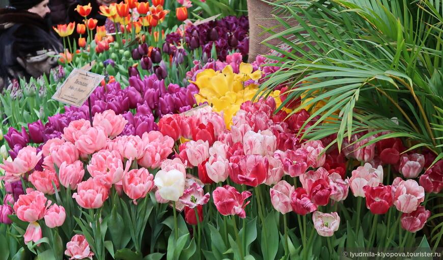 Больше всего на выставке тюльпанов. К её открытию расцвели около 8 тысяч.