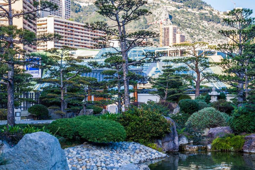 Сосна - основное дерево японских садов.