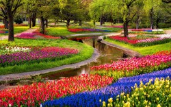 Сезон цветения в парке «Кейкенхоф» начнется в конце марта