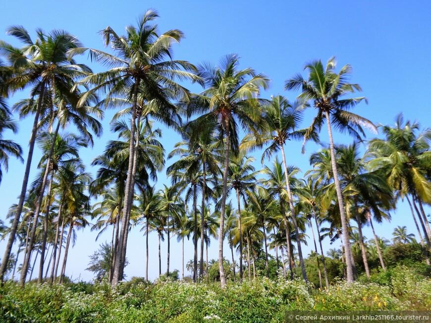 Пальмовые рощи в АГОНДЕ