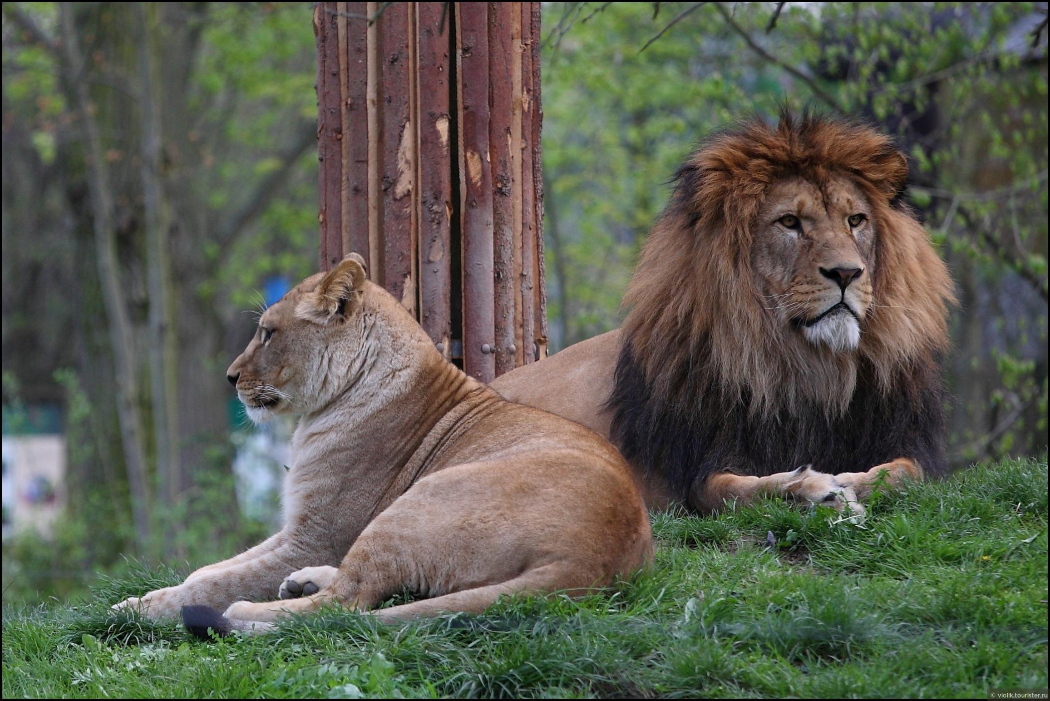 Пльзеньский вояж. Часть вторая: пльзеньский зоопарк