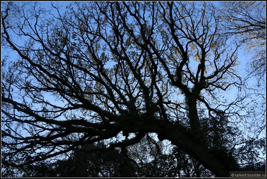 Над головой раскидывают ветви волшебные деревья.