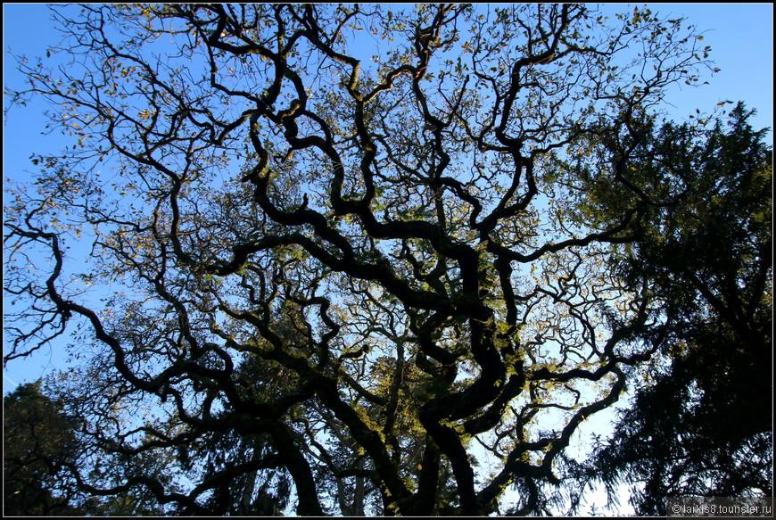 Деревья над головой становились все интереснее и загадочнее.