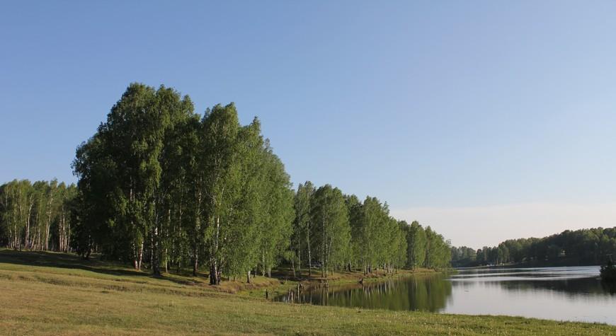 Берёзовый лес на берегу реки в Новосибирской области.