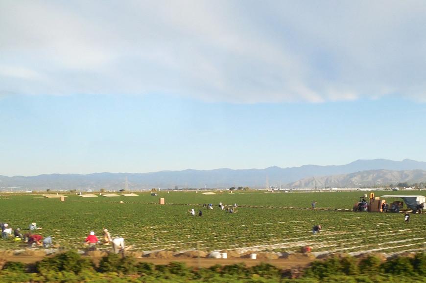 Говорят, что здешние фермерские хозяйства широко используют сезонный труд нелегальных мигрантов из Мексики.