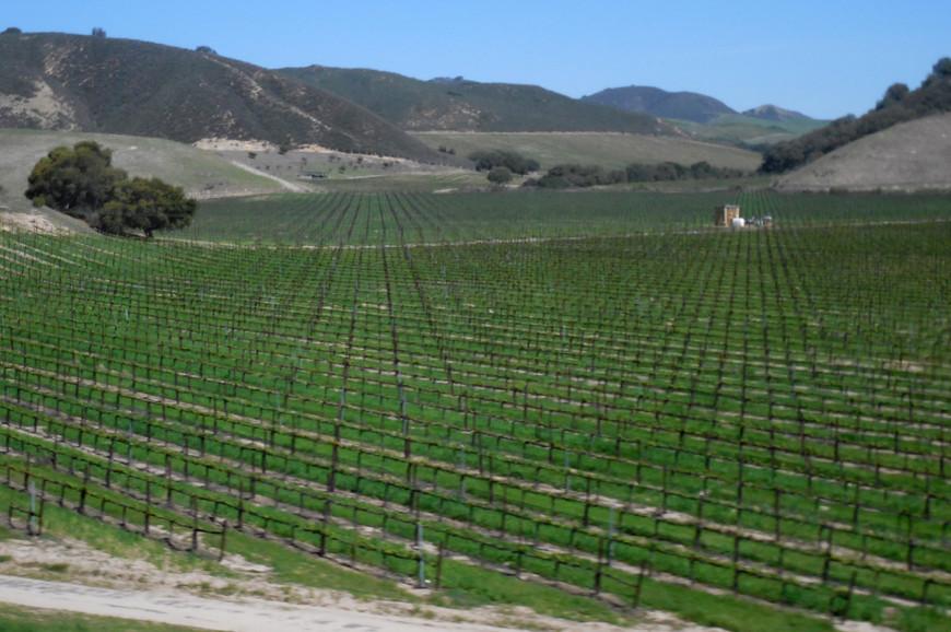 Калифорния славится своими виноградниками и винами. Она - основной винодельческий регион США, и если бы Калифорния была бы отдельным государством, то считалась бы четвертым производителем вина в мире.