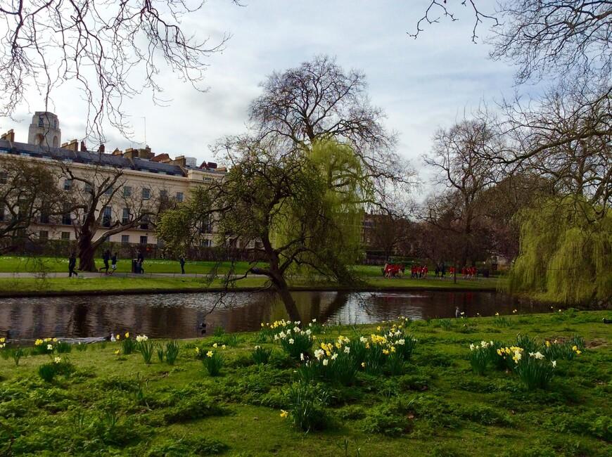 Цветущие в марте нарциссы также вездесущи в Великобритании, как одуванчики летом в России.