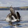 Дельфины афалины не так уж и безобидны, так что не поддавайтесь обаянию их