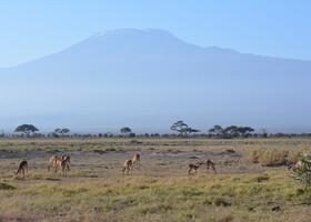 Африканский дневник. Кения. Люди и животные Амбосели