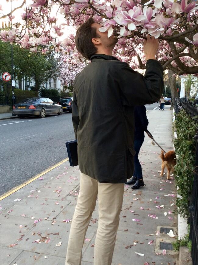 Запах цветущих магнолий, мимоз, всевозможных видов вишнёвых (сливы, вишни, миндаля)  дурманит воздух приятнейшими ароматами. В это время повсюду цветут благоухающие гиацинты. Зимние виды анютиных глазок, вереск, кусты вербены, жимолости и магоний продолжают с зимы рассеивать свои разнообразные тонкие или терпкие запахи.