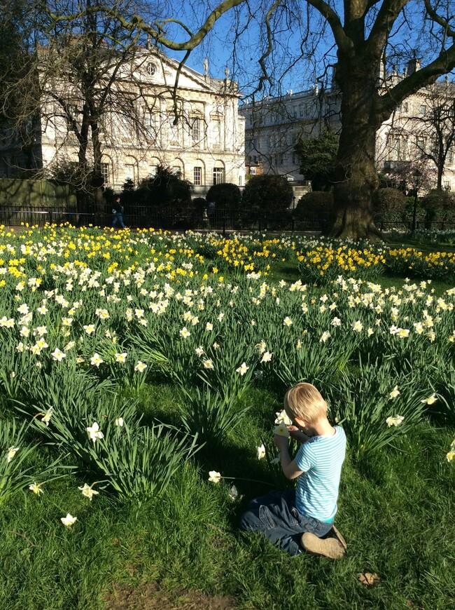 Грин Парк, самый маленький из 8 Королевских Парков Лондона. Слева Спенсер Хауз, построенный предками Принцессы Дианы. Нынче его снимает Дом Ротшильдов, Штаб-квартира которых находится с 18-ого века рядом в тихом переулке.
