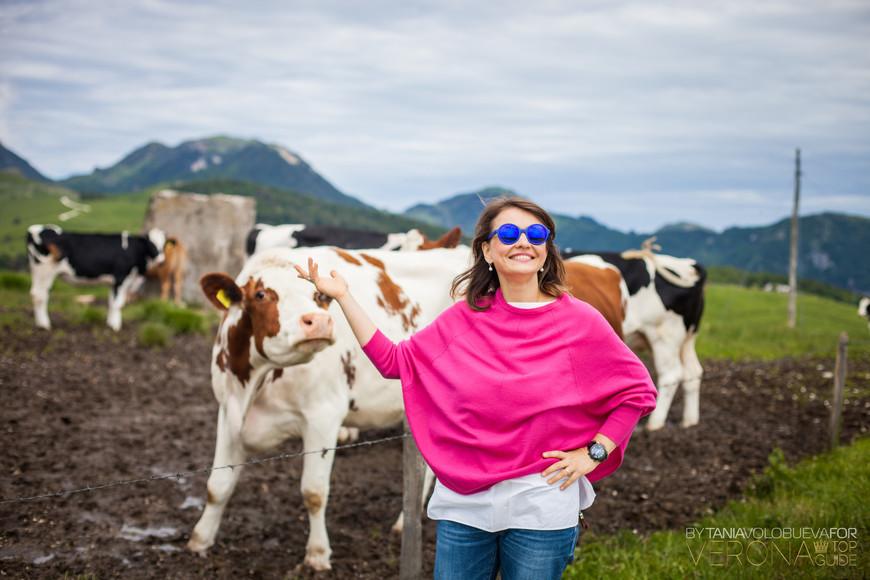 Ждем вас в горах Лессиния с коровой Бурлиной!