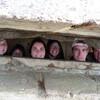 Взгляд из немецкого бункера