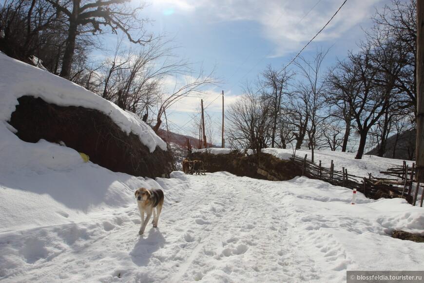 По снегу в горку. Местная женщина показала нам дорогу между домов мимо забора вниз к водопаду. Собаки везде с бирками бегают за туристами с надежде получить кусок мяса. Поэтуме всегда надо брать с собой еду, лучше мясную.
