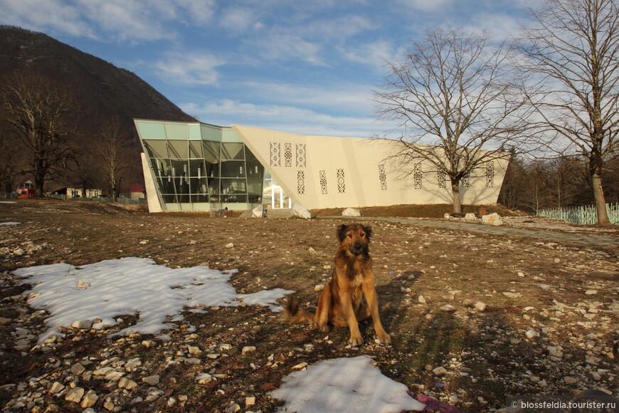 Собачка провожает нас около здания туристического офиса каньона Окаце