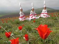 В Калмыкии в апреле пройдет фестиваль тюльпанов