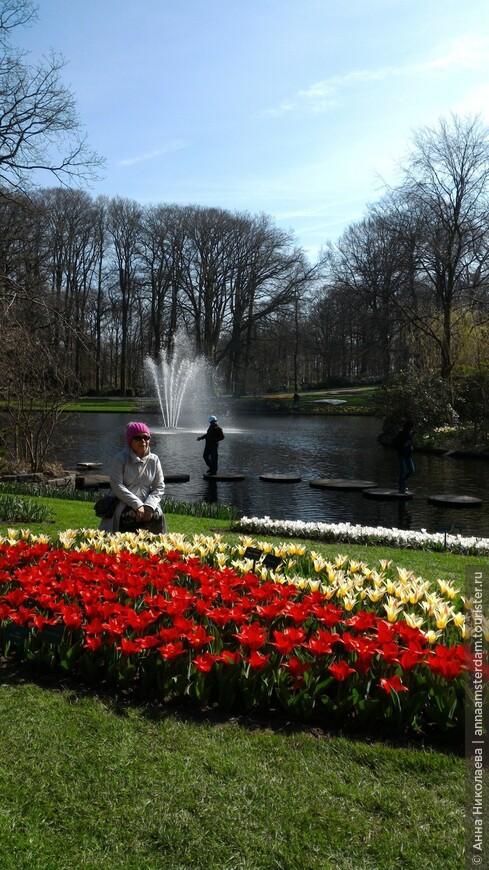 Первые тюльпаны 24 марта 2017  Парк Кеукенхоф открыл свои двери для посетителей 23 марта. И всего на два месяца. Успейте увидеть до 21 мая!!!