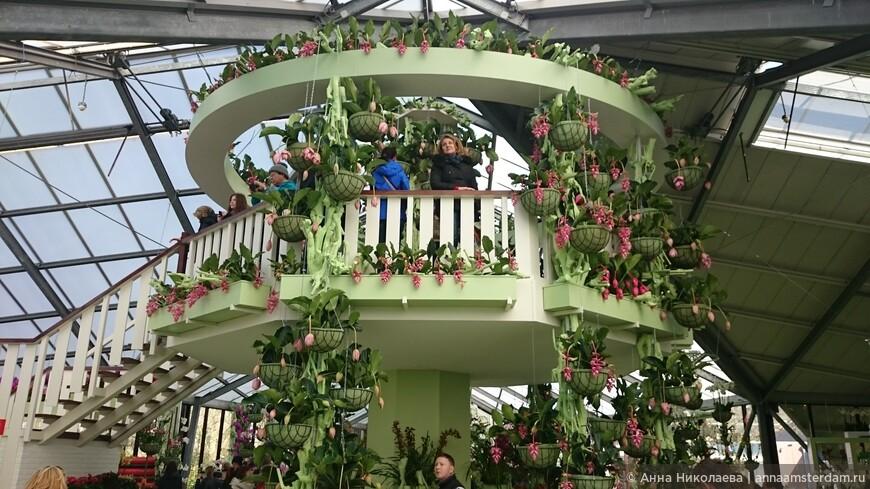 Мои довольные туристы в парке Кеукенхоф 24 марта 2017  Цветы на фото Мединилла j'adore dolce vita (я обожаю сладкую жизнь) и Мединила magnifica (великолепная)