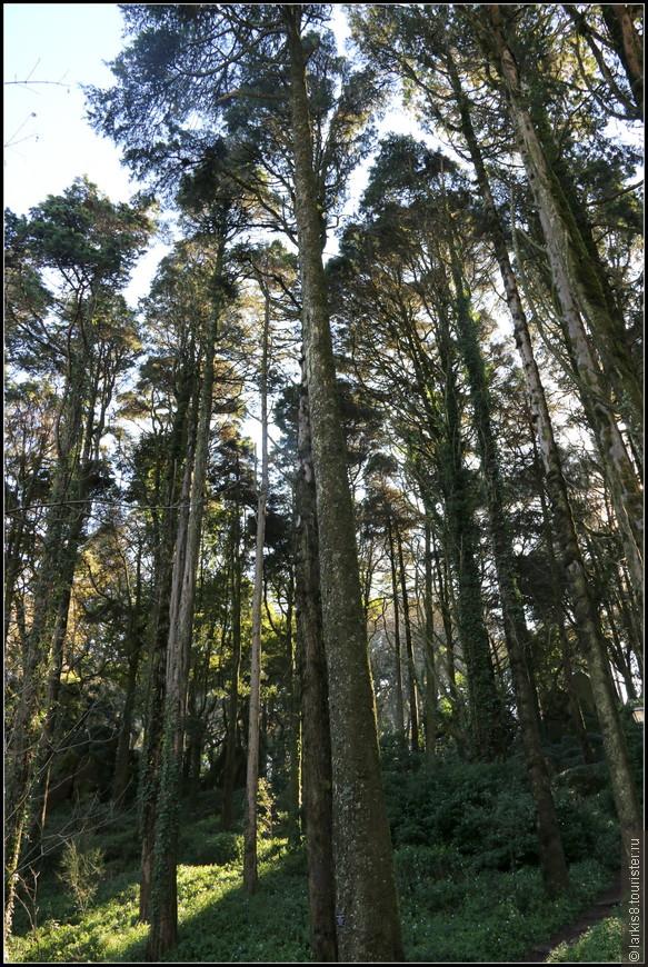 Дорога к Замку идет через сказочный лес, но не волнуйтесь, она совсем не долгая и очень красивая!