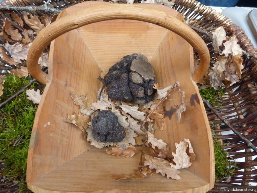 Черный трюфель Перигора - почти на вес золота.
