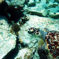 Рыбы и люди тропических остров, кто кого первый съест?