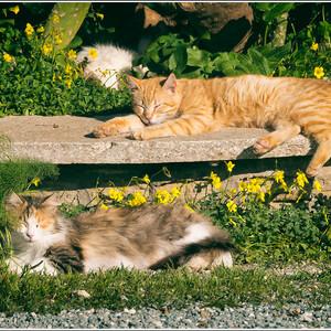 Весенний Кипр