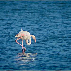 Фламинго в соленом озере Ларнаки.