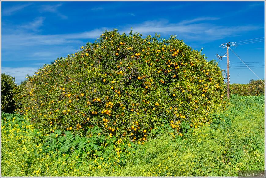 Пора апельсинов.