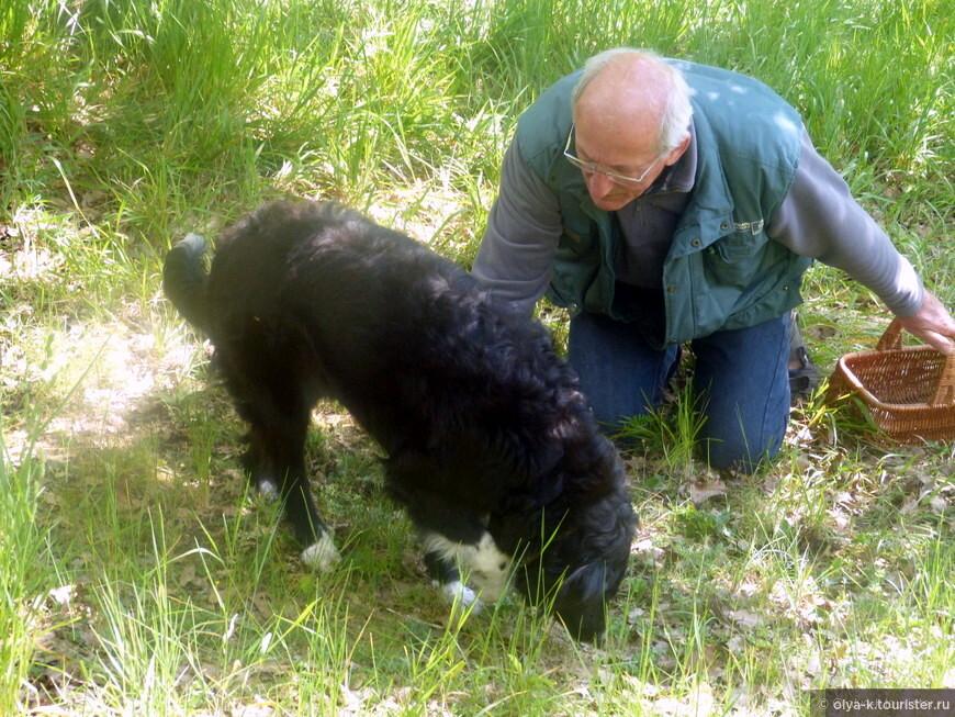 """Хозяин фермы Эдуард и его """"трюфельный"""" пес."""