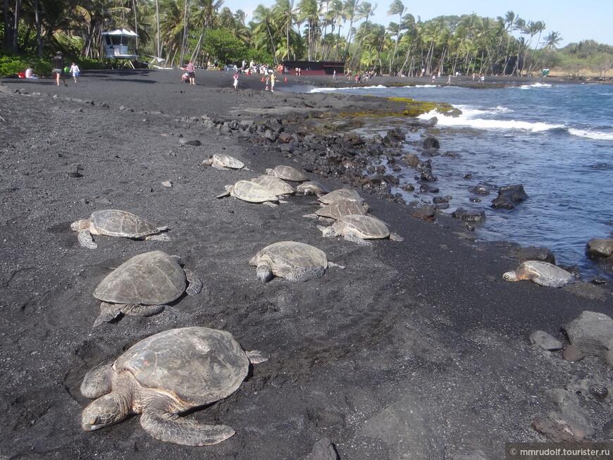 черепахи на чёрном пляже на Большом острове