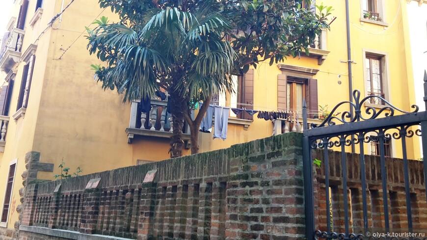 Пальма и магнолия в венецианском дворике