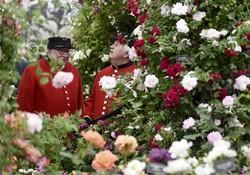 В Лондоне пройдет знаменитое цветочное шоу