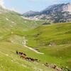 Лошади в Дурмиторе
