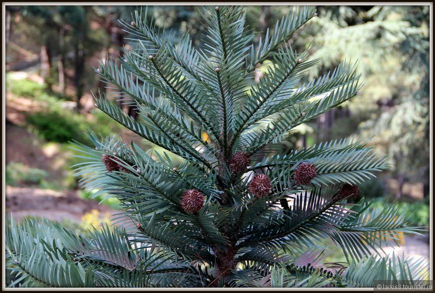 Это какое-то очень редкое растение, которое очень сложно приживалось в парке. Увы, название забыла. Но очень оно необычно.