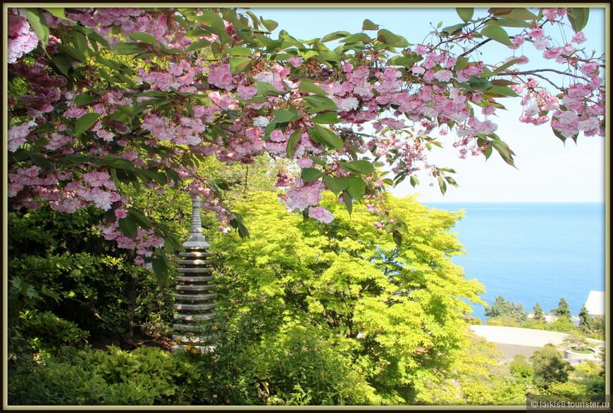 Японский садик был закрыт на ремонт. Но разве туристер ради фотографий цветущей сакуры не перелезет через заборы и не продерется сквозь кусты? Именно это я и сделала. Ведь Япония пока остается далекой мечтой. А сакура в цветах - вот она, в Крыму!!!