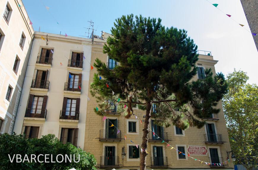 Сосна на площади Санта-Мария-дель-Пи