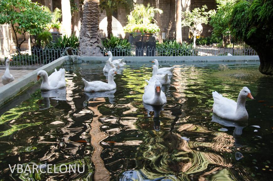 13 белых гусей сиволизируют 13 лет жизни Святой Элуалии