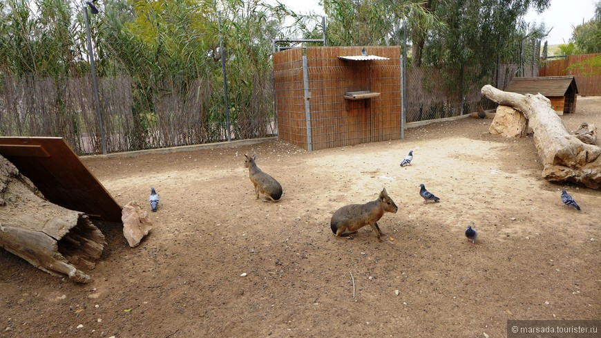 В 1979 г. был основан зоопарк, который в дальнейшем интенсивно развивался в 80-е и 90-е гг. при поддержке израильского министерства образования, министерства жилищного строительства и частных лиц.