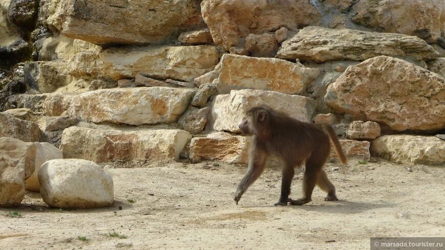 Немного приматов