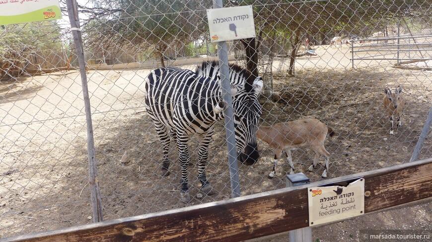 В жизни бы не подумала, что зебры едят Педигри)))
