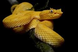 В аэропорту Амстердама арестован россиянин со змеями, ящерицами и тараканами в багаже