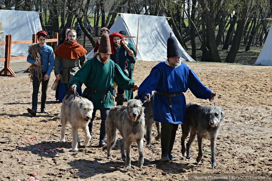 Красавцы- ирландские волкодавы, тоже очень древняя порода собак.