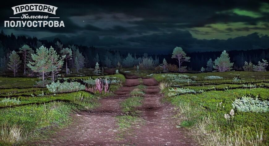 Ночной лес на Аметистовом берегу