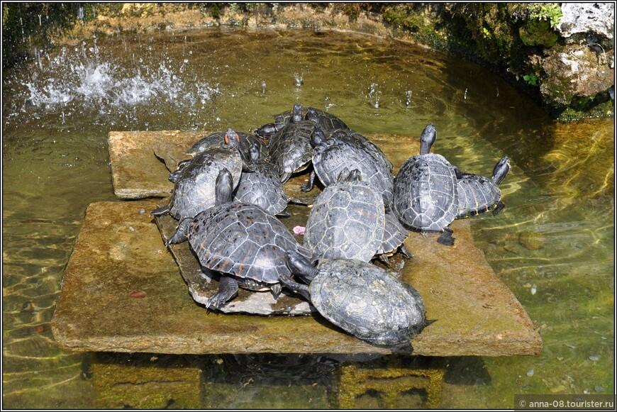 В одном греются на солнышке черепахи.