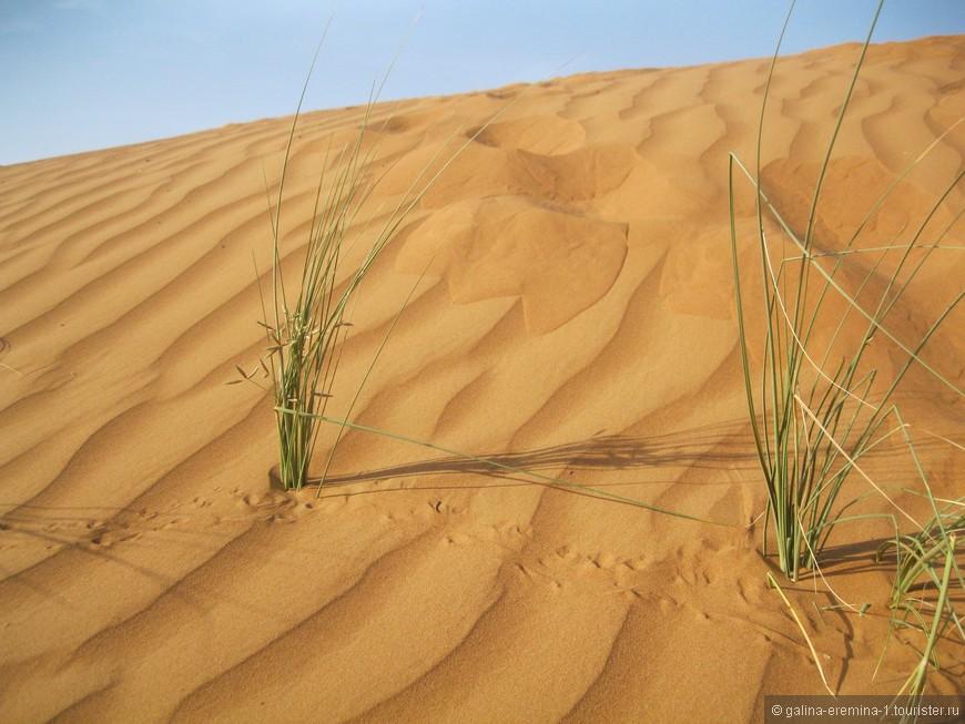 в Аравийской пустыне